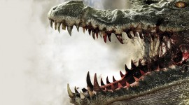 4K Crocodiles Image