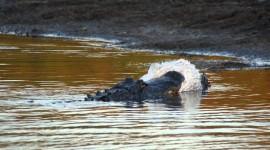 4K Crocodiles Photo Download