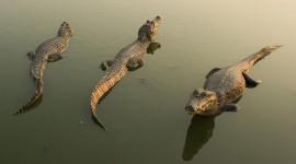4K Crocodiles Pics