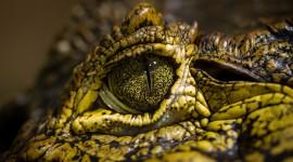 4K Crocodiles Wallpaper Download Free