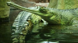 4K Crocodiles Wallpaper For PC