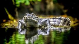 4K Crocodiles Wallpaper Full HD
