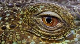 4K Crocodiles Wallpaper#1