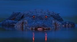 4K Crocodiles Wallpaper#3