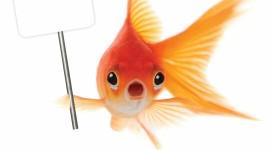 4K Fish Image