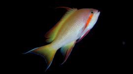 4K Fish Photo