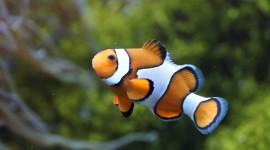 4K Fish Photo Free
