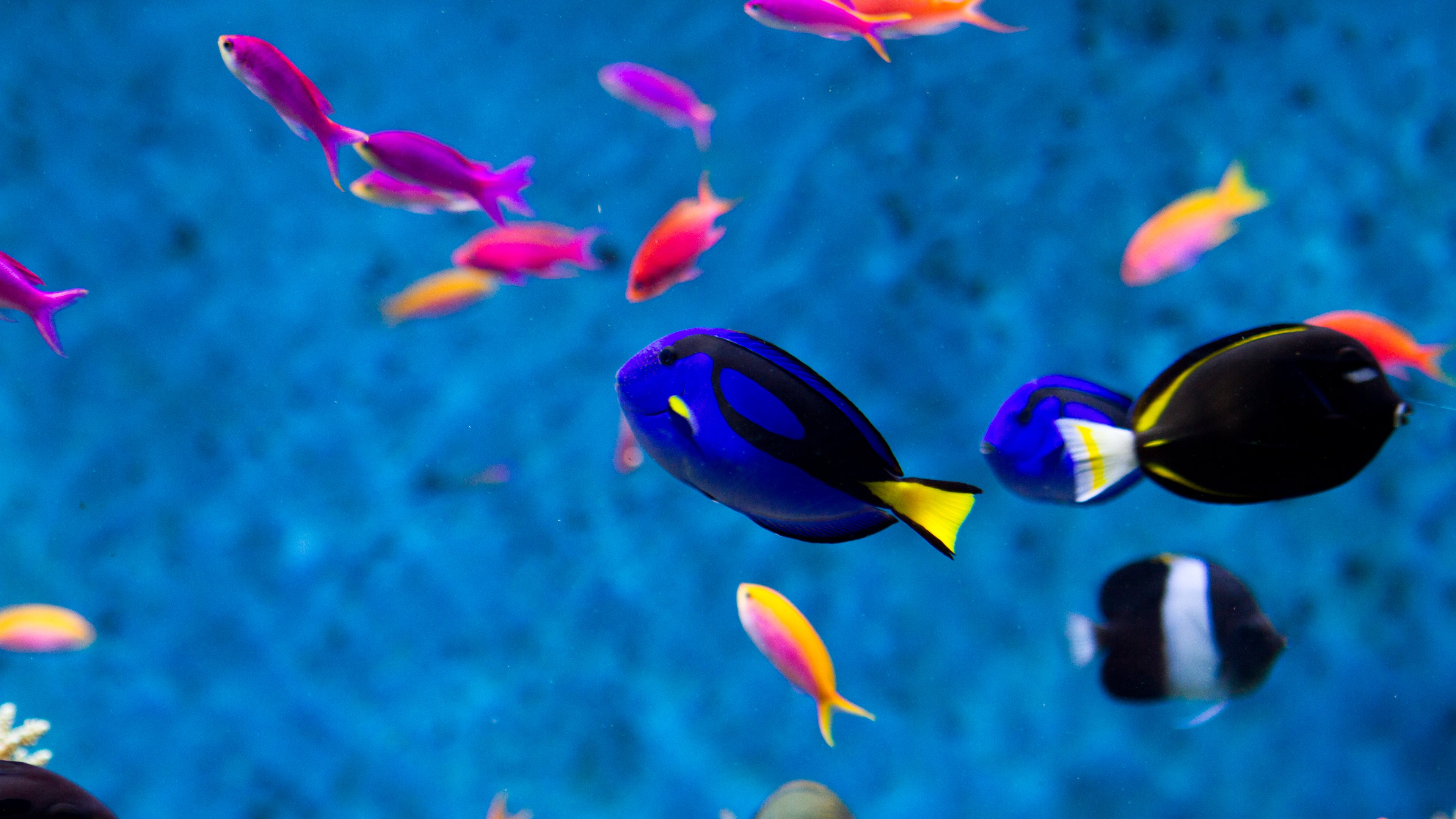 4k Fish Wallpapers High Quality Download Free