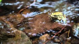 4K Frogs Desktop Wallpaper