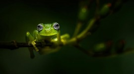 4K Frogs Desktop Wallpaper Free