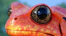 4K Frogs Desktop Wallpaper HD