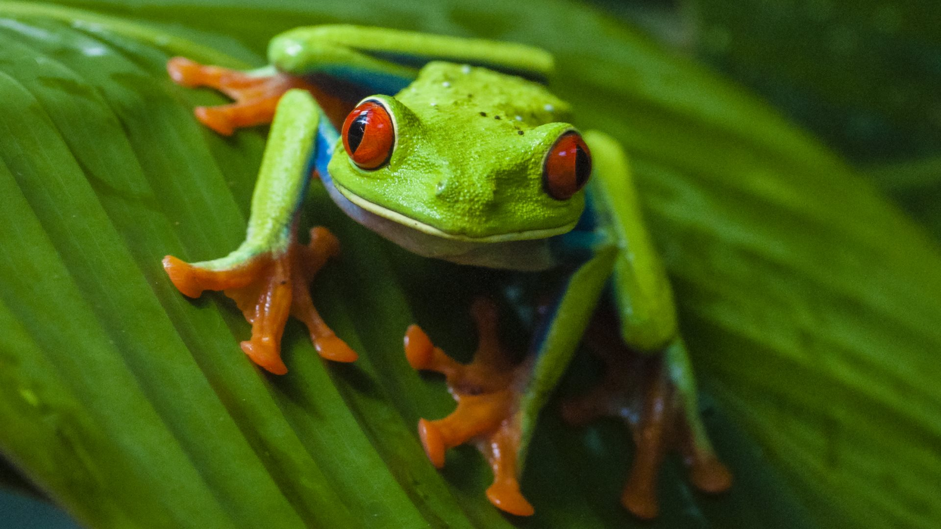4k frogs wallpapers high quality download free