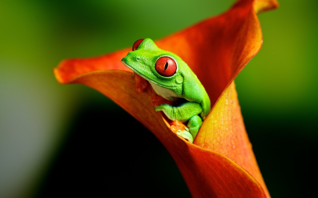 4K Frogs wallpapers HD