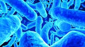 4K Germs Desktop Wallpaper