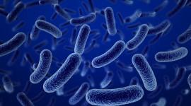 4K Germs Desktop Wallpaper For PC