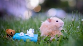 4K Hamsters Desktop Wallpaper HD
