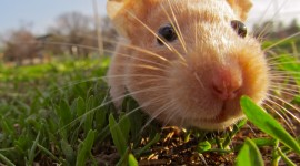 4K Hamsters Photo Download