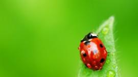 4K Insects Desktop Wallpaper