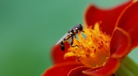 4K Insects Photo Download