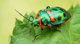 4K Insects Wallpaper Download Free