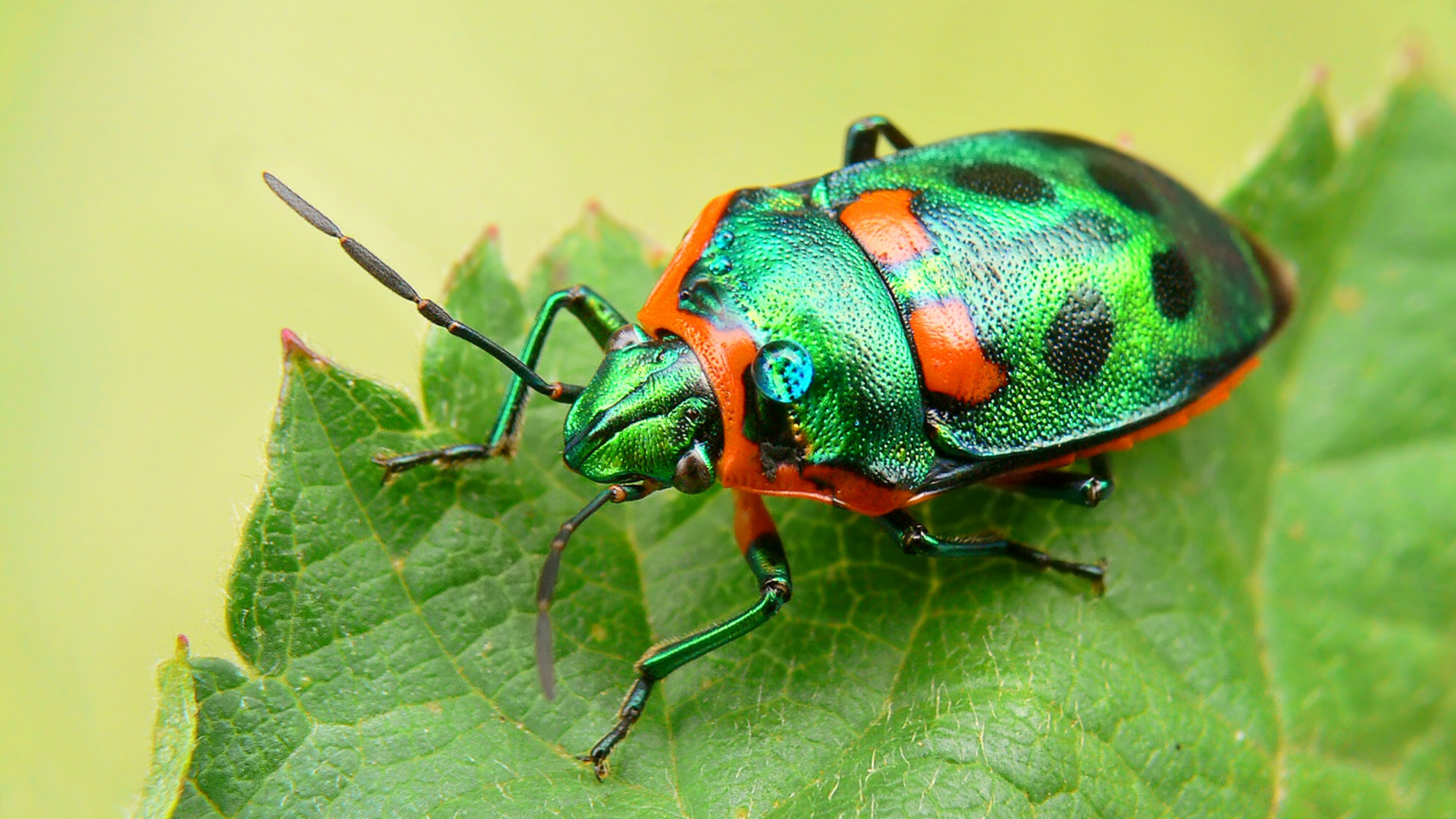 4K Insects Wallpapers High Quality   Download Free