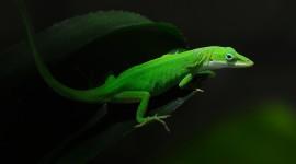 4K Lizards Desktop Wallpaper