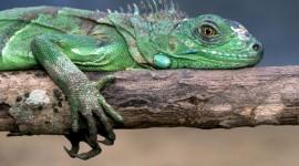 4K Lizards Desktop Wallpaper HD