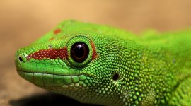 4K Lizards Photo Free