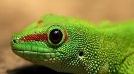 4K Lizards Photo Free