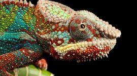 4K Lizards Photo Free#2