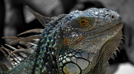 4K Lizards Photo Free#3