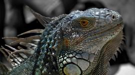 4K Lizards Photo Free#3