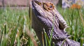 4K Lizards Photo#1