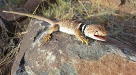 4K Lizards Photo#3