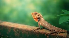 4K Lizards Photo#4