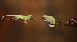 4K Lizards Pics