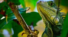 4K Lizards Wallpaper 1080p