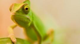 4K Lizards Wallpaper Download