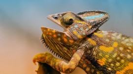 4K Lizards Wallpaper For Desktop