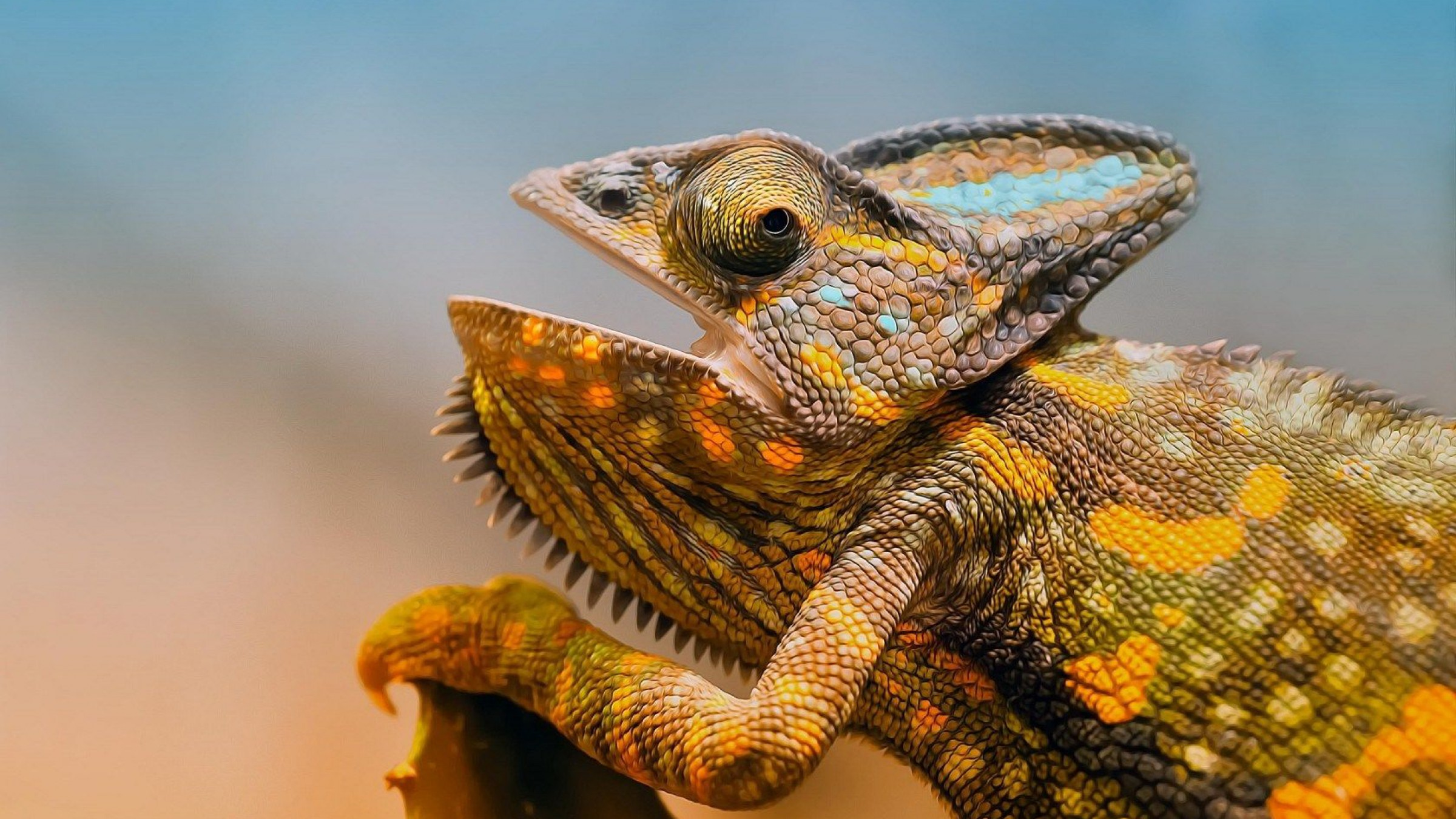 4K Lizards Wallpapers High Quality | Download Free