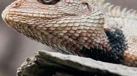 4K Lizards Wallpaper For Mobile