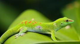 4K Lizards Wallpaper For PC