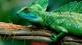 4K Lizards Wallpaper Full HD#1