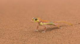 4K Lizards Wallpaper Gallery#1
