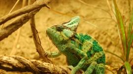 4K Lizards Wallpaper Gallery#2