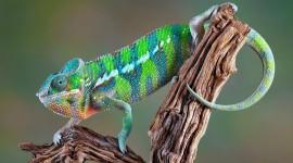 4K Lizards Wallpaper Gallery#3