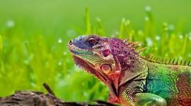 4K Lizards Wallpaper#3