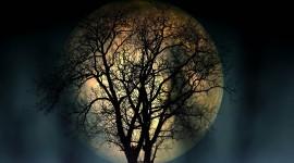 4K Moon Photo Free