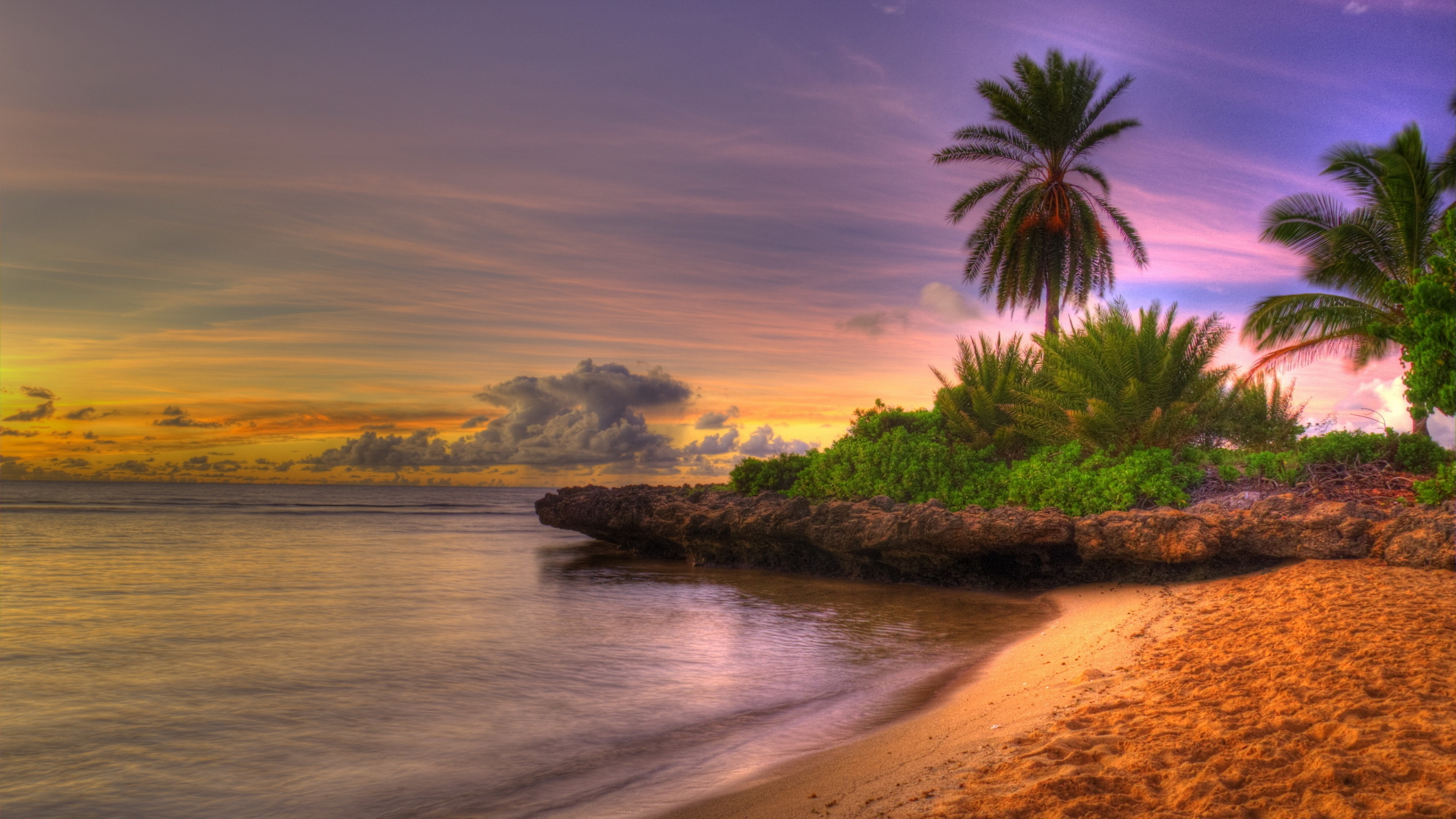 4k palm trees wallpapers high quality download free - Free palm tree screensavers ...