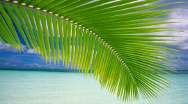 4K Palm Trees Photo Free#2
